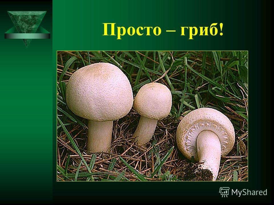 Просто – гриб!