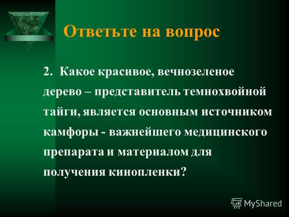 Ответьте на вопрос 2. Какое красивое, вечнозеленое дерево – представитель темнохвойной тайги, является основным источником камфоры - важнейшего медицинского препарата и материалом для получения кинопленки?