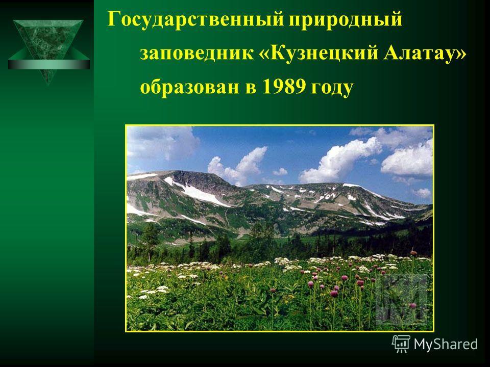 Государственный природный заповедник «Кузнецкий Алатау» образован в 1989 году