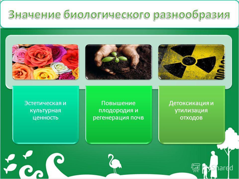 Эстетическая и культурная ценность Повышение плодородия и регенерация почв Детоксикация и утилизация отходов