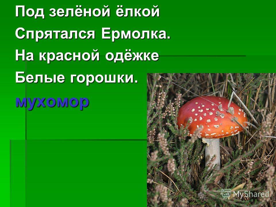 Под зелёной ёлкой Спрятался Ермолка. На красной одёжке Белые горошки. мухомор