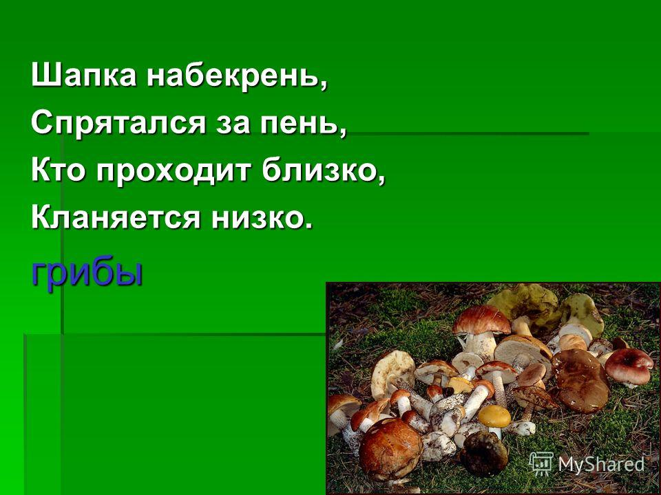 Шапка набекрень, Спрятался за пень, Кто проходит близко, Кланяется низко. грибы