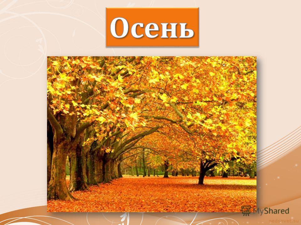 Утром мы во двор идём - Листья сыплются дождём, Под ногами шелестят И летят, летят, летят...