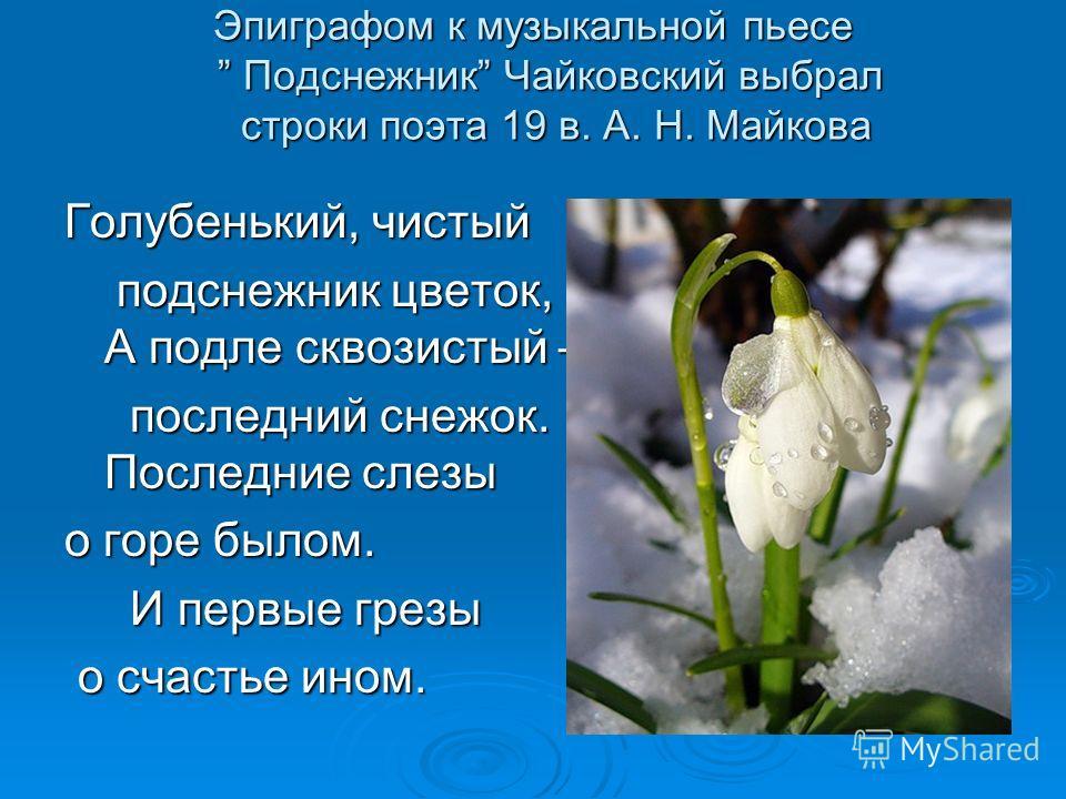 Эпиграфом к музыкальной пьесе Подснежник Чайковский выбрал строки поэта 19 в. А. Н. Майкова Голубенький, чистый подснежник цветок, А подле сквозистый – подснежник цветок, А подле сквозистый – последний снежок. Последние слезы последний снежок. Послед