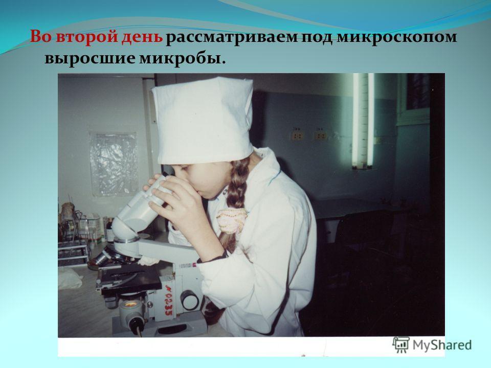 Во второй день рассматриваем под микроскопом выросшие микробы.