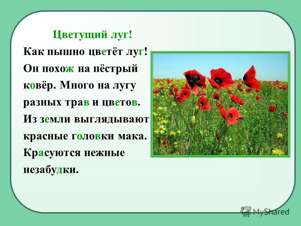 Цветущий луг! Как пышно цветёт луг! Он похож на пёстрый ковёр. Много на лугу разных трав и цветов. Из земли выглядывают красные головки мака. Красуются нежные незабудки.