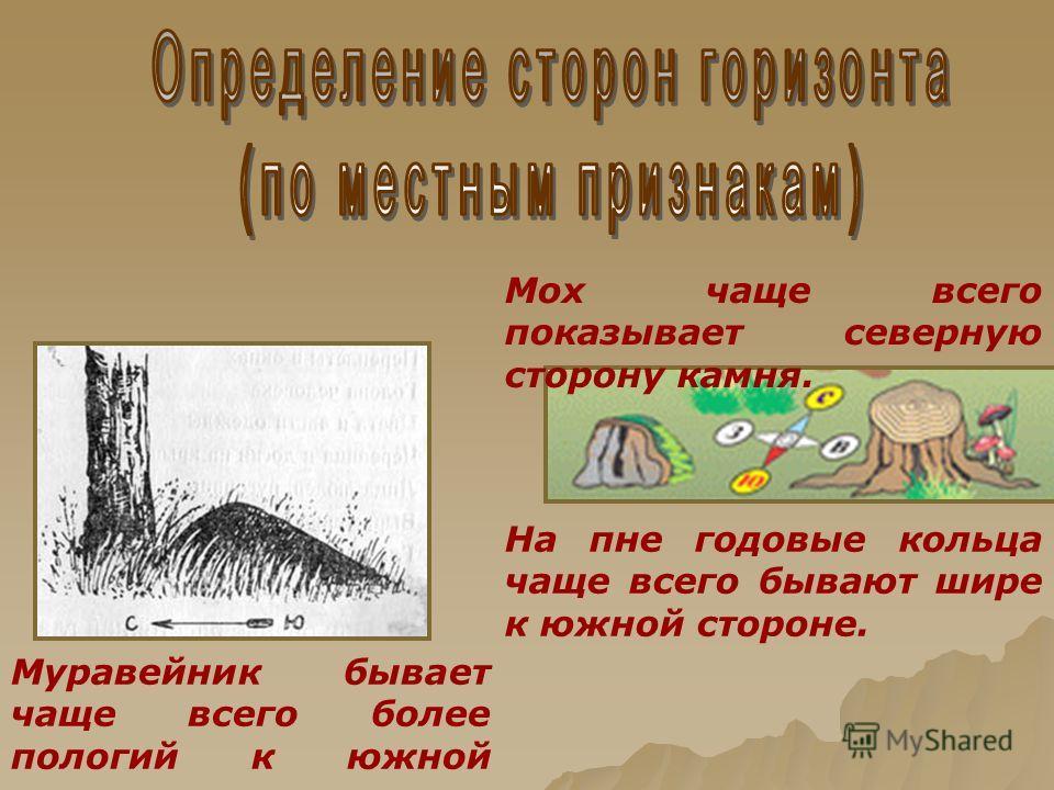 Муравейник бывает чаще всего более пологий к южной стороне. Мох чаще всего показывает северную сторону камня. На пне годовые кольца чаще всего бывают шире к южной стороне.