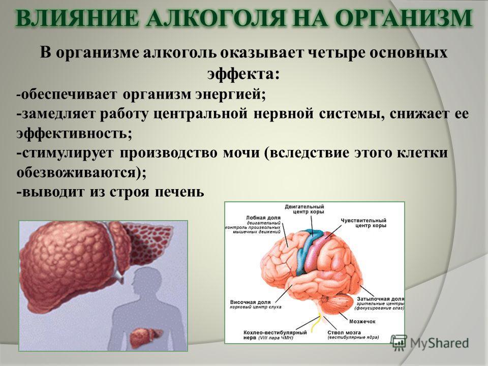 В организме алкоголь оказывает четыре основных эффекта: - обеспечивает организм энергией; -замедляет работу центральной нервной системы, снижает ее эффективность; -стимулирует производство мочи (вследствие этого клетки обезвоживаются); -выводит из ст
