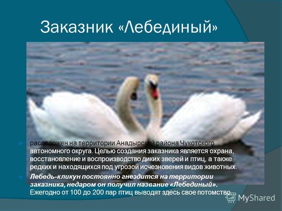 Заказник «Лебединый» расположен на территории Анадырский района Чукотского автономного округа. Целью создания заказника является охрана, восстановление и воспроизводство диких зверей и птиц, а также редких и находящихся под угрозой исчезновения видов