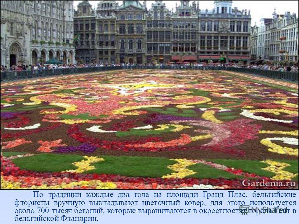 По традиции каждые два года на площади Гранд Плас, бельгийские флористы вручную выкладывают цветочный ковер, для этого используется около 700 тысяч бегоний, которые выращиваются в окрестностях города Гент в бельгийской Фландрии.