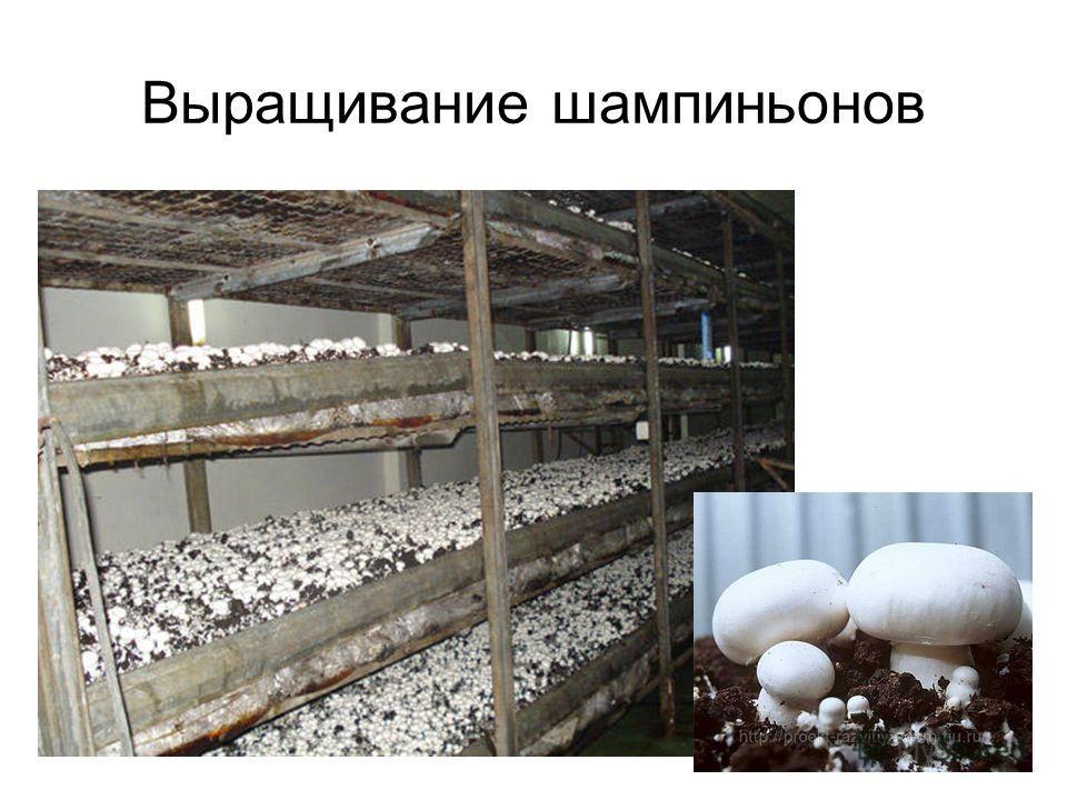 Обучение технологии выращивания грибов 11