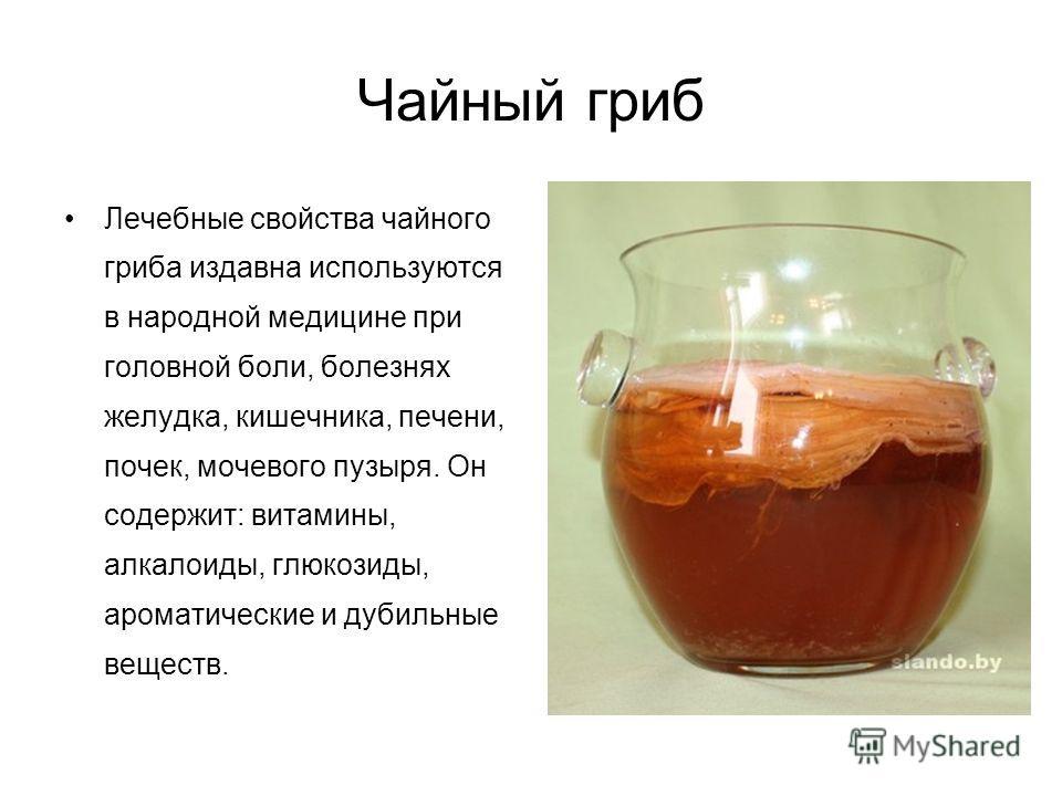 Лечебные свойства чайного гриба издавна используются в народной медицине при головной боли, болезнях желудка, кишечника, печени, почек, мочевого пузыря. Он содержит: витамины, алкалоиды, глюкозиды, ароматические и дубильные веществ.