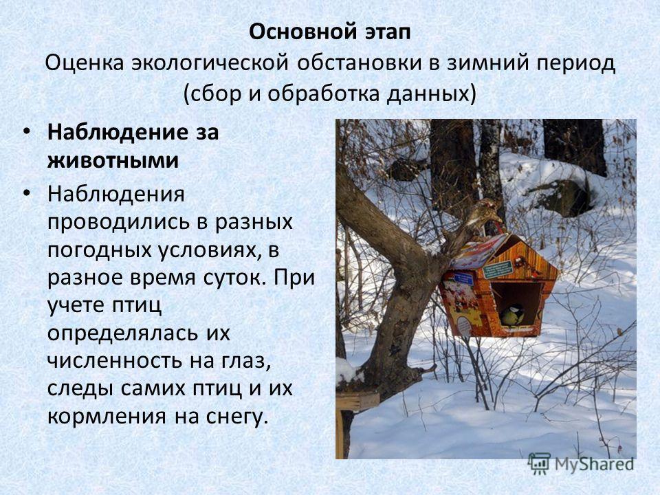 Основной этап Оценка экологической обстановки в зимний период (сбор и обработка данных) Наблюдение за животными Наблюдения проводились в разных погодных условиях, в разное время суток. При учете птиц определялась их численность на глаз, следы самих п