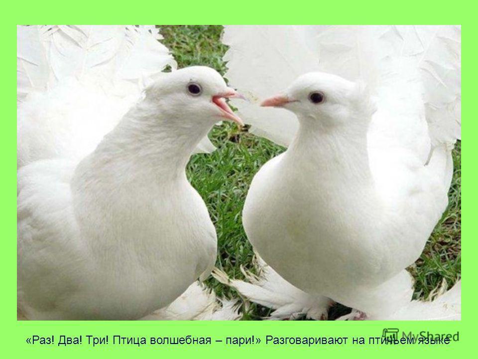 «Раз! Два! Три! Птица волшебная – пари!» Разговаривают на птичьем языке