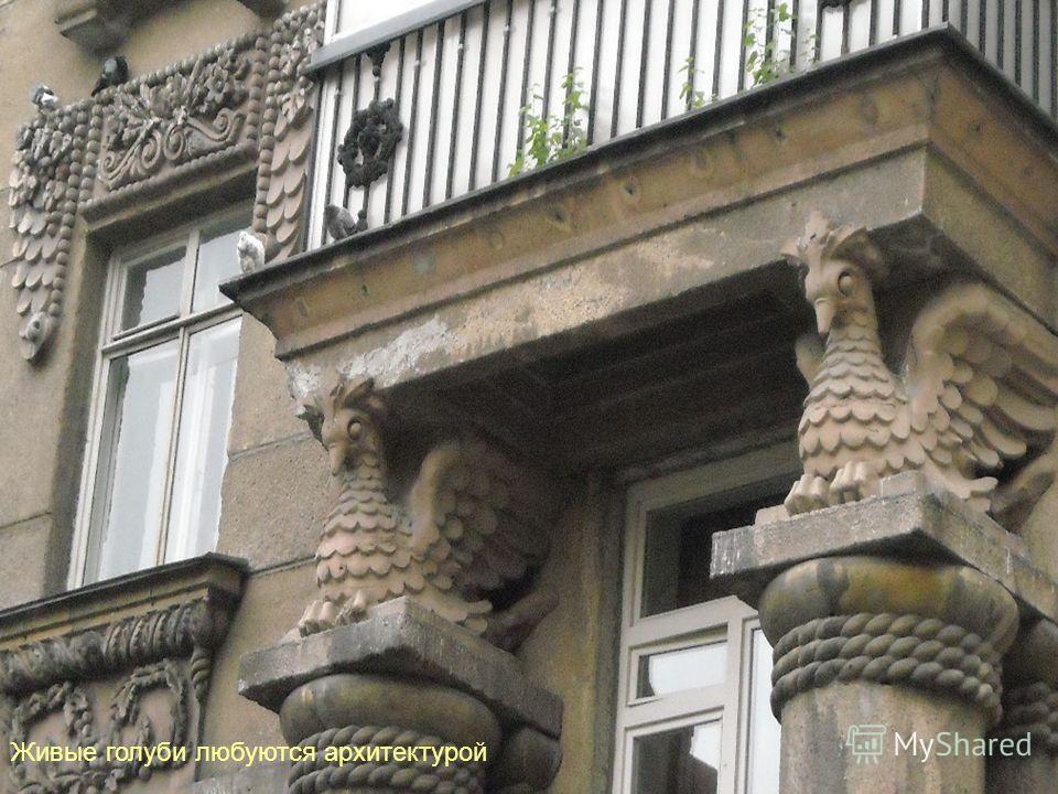 Живые голуби любуются архитектурой