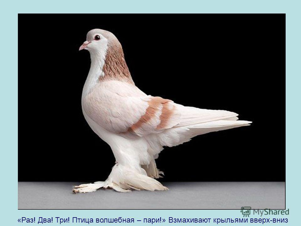 «Раз! Два! Три! Птица волшебная – пари!» Взмахивают крыльями вверх-вниз