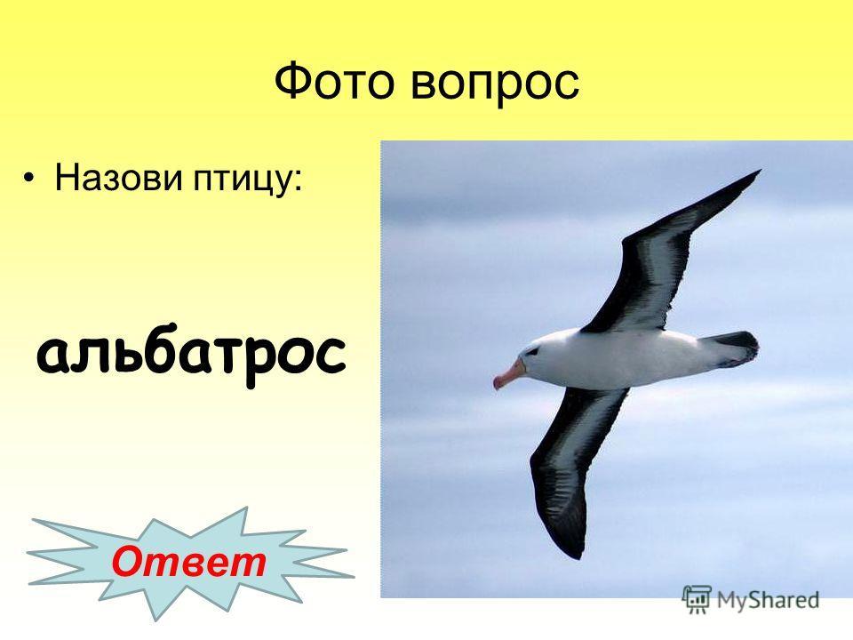 Фото вопрос Назови птицу: Ответ альбатрос