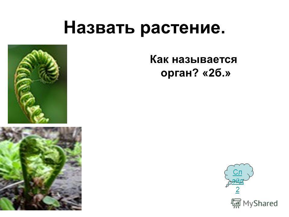 Назвать растение. Как называется орган? «2 б.» Сл айд 2