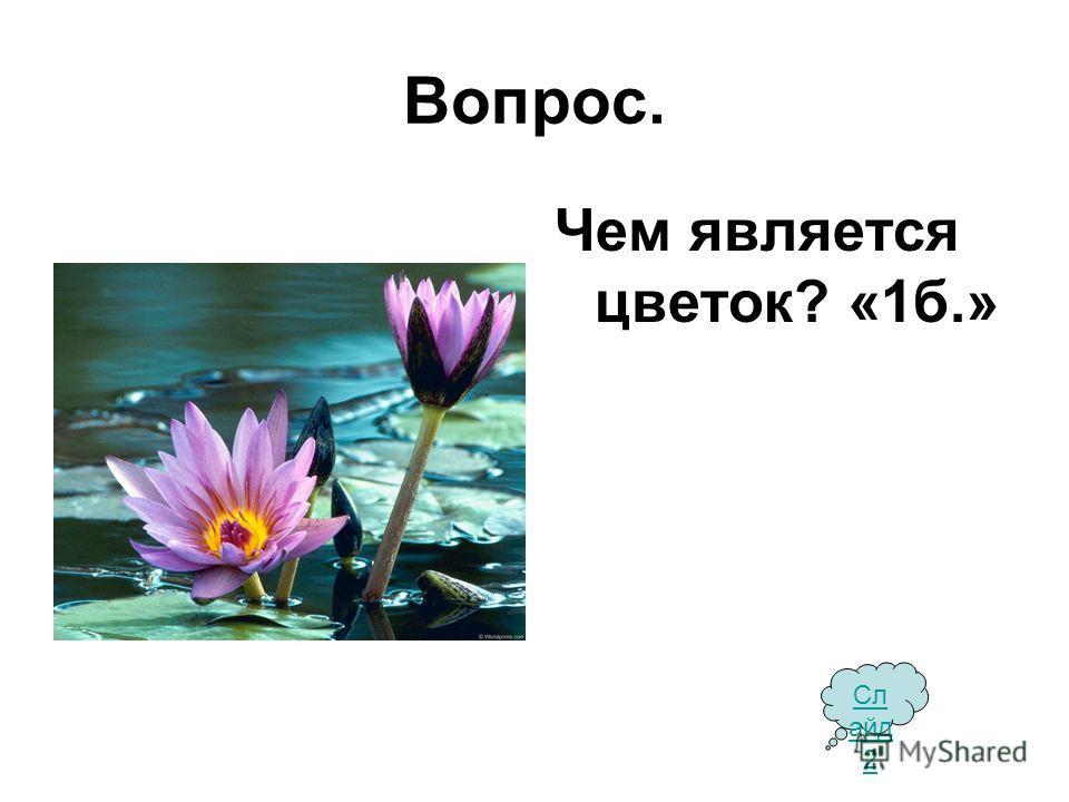 Вопрос. Чем является цветок? «1 б.» Сл айд 2