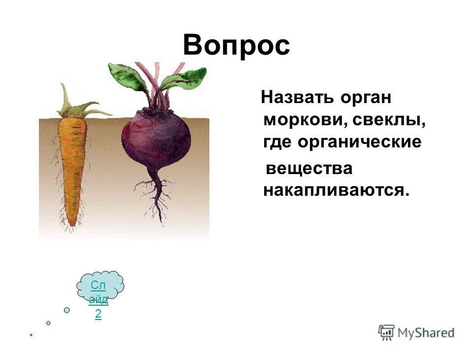 Вопрос Назвать орган моркови, свеклы, где органические вещества накапливаются. Сл айд 2