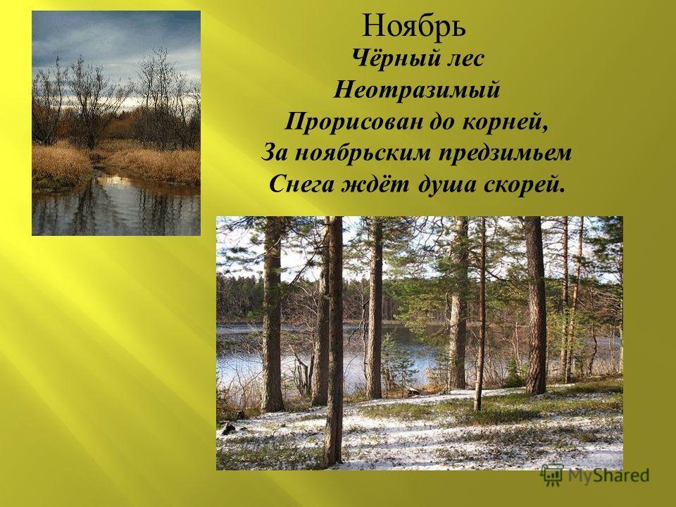 Чёрный лес Неотразимый Прорисован до корней, За ноябрьским предзимьем Снега ждёт душа скорей. Ноябрь