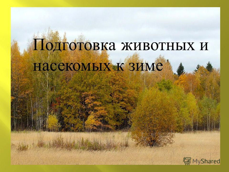 \ Подготовка животных и насекомых к зиме