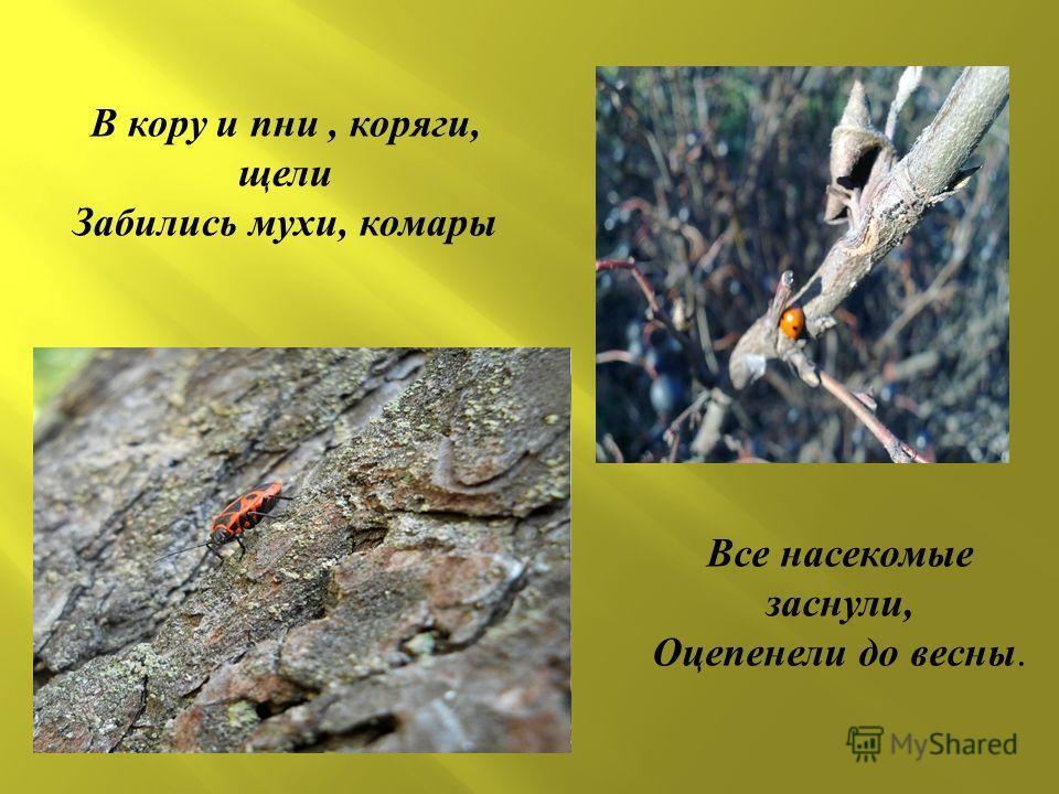 В кору и пни, коряги, щели Забились мухи, комары Все насекомые заснули, Оцепенели до весны.