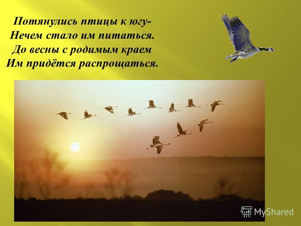 Потянулись птицы к югу - Нечем стало им питаться. До весны с родимым краем Им придётся распрощаться.