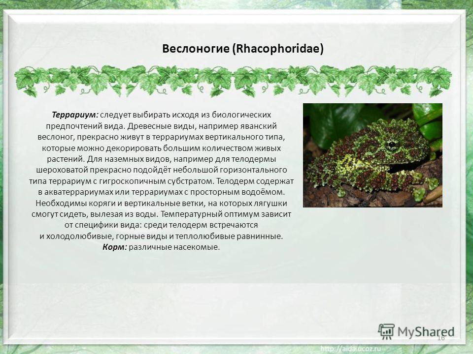 Веслоногие (Rhacophoridae) Террариум: следует выбирать исходя из биологических предпочтений вида. Древесные виды, например яванский веслоног, прекрасно живут в террариумах вертикального типа, которые можно декорировать большим количеством живых расте