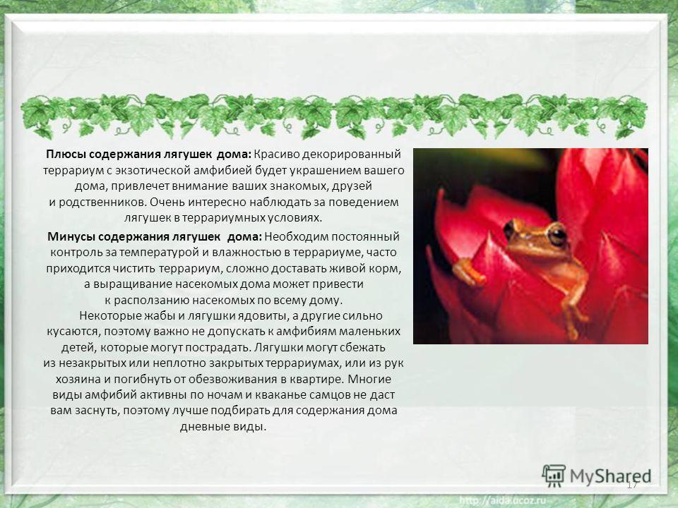 Плюсы содержания лягушек дома: Красиво декорированный террариум с экзотической амфибией будет украшением вашего дома, привлечет внимание ваших знакомых, друзей и родственников. Очень интересно наблюдать за поведением лягушек в террариумных условиях.