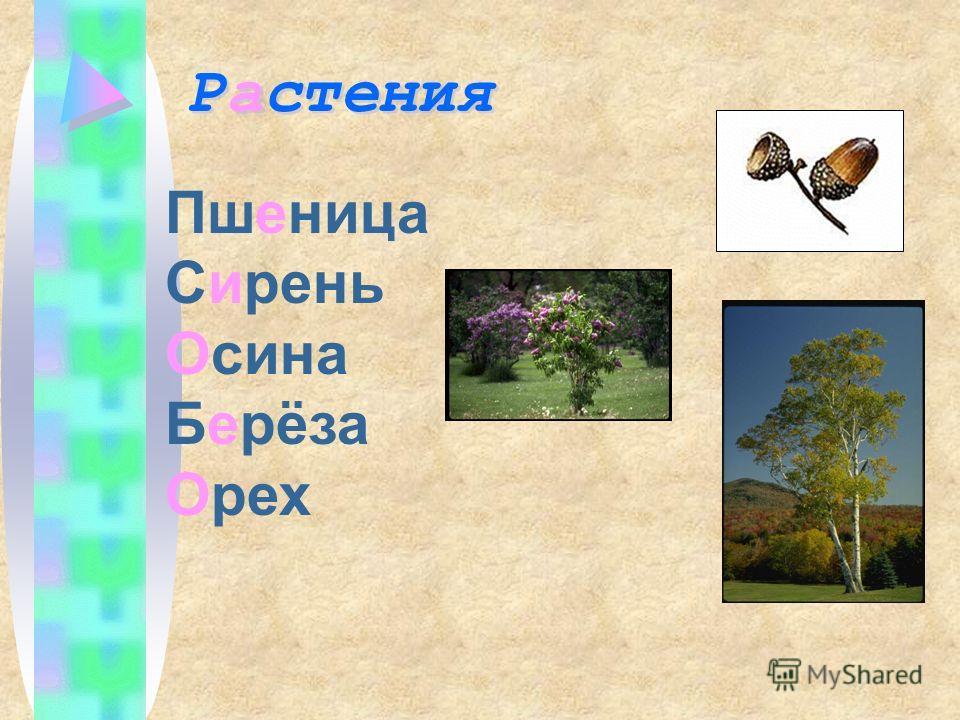 Пшеница Сирень Осина Берёза Орех Растения Растения