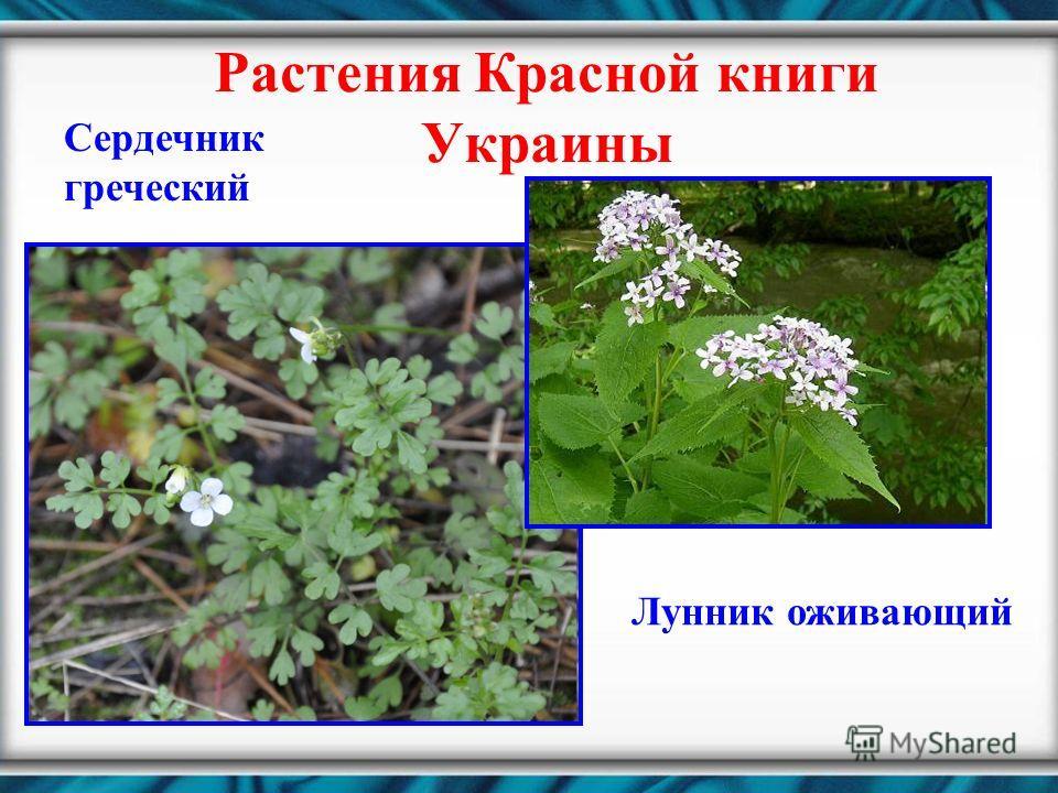 Растения Красной книги Украины Сердечник греческий Лунник оживающий