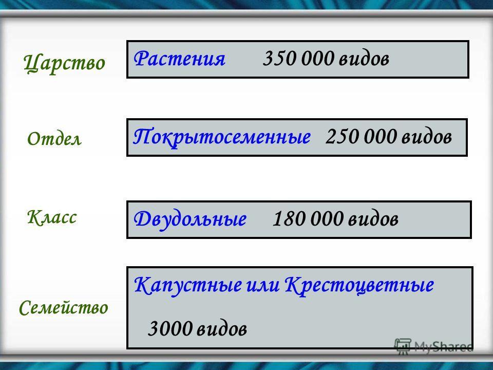 Царство Отдел Класс Семейство Растения 350 000 видов Покрытосеменные 250 000 видов Двудольные 180 000 видов Капустные или Крестоцветные 3000 видов
