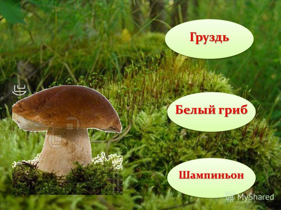 Груздь Бледная поганка Шампиньон Ядовитый гриб!!!