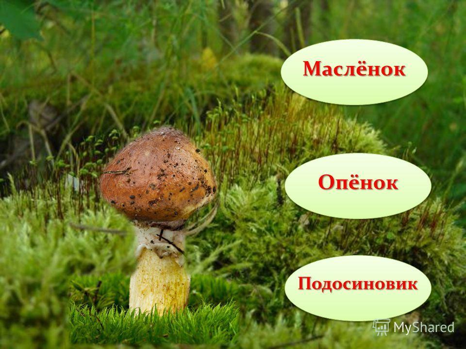 Дорогой друг! Знаешь ли ты грибы? Давай поиграем! Если ты правильно отгадаешь название гриба – оно станет больше, если неправильно – исчезнет. Желаю тебе успеха! Желаю тебе успеха!