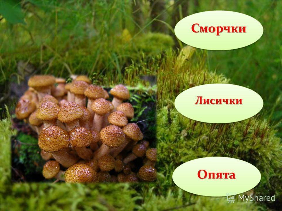 Белый гриб Шампиньон Подосиновик