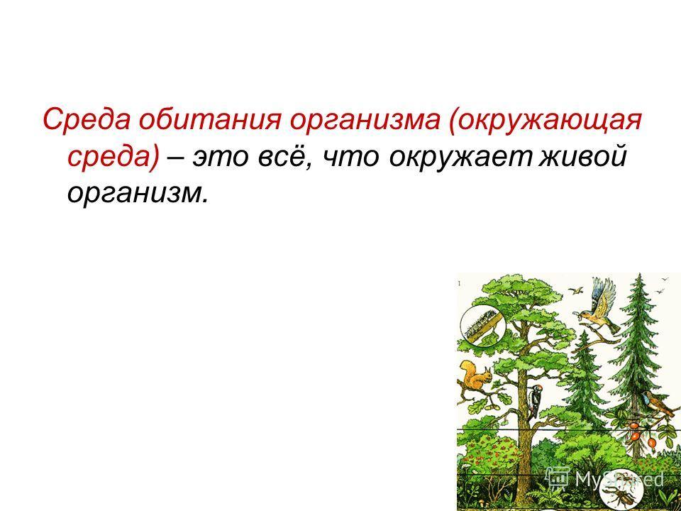 Среда обитания организма (окружающая среда) – это всё, что окружает живой организм.