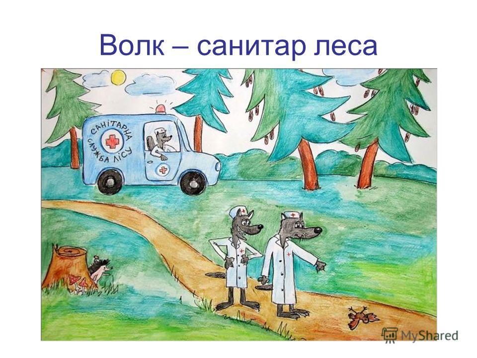 Волк – санитар леса