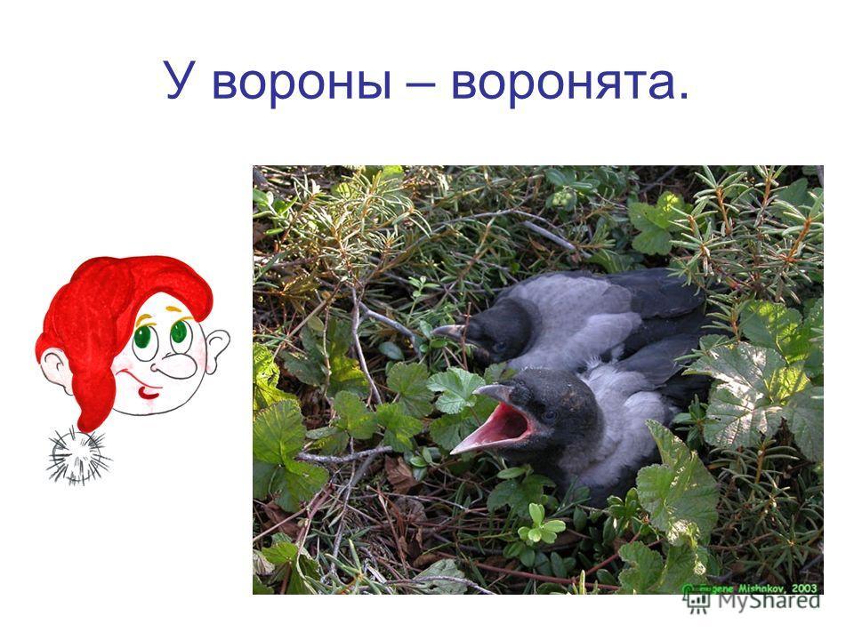 У вороны – воронята.