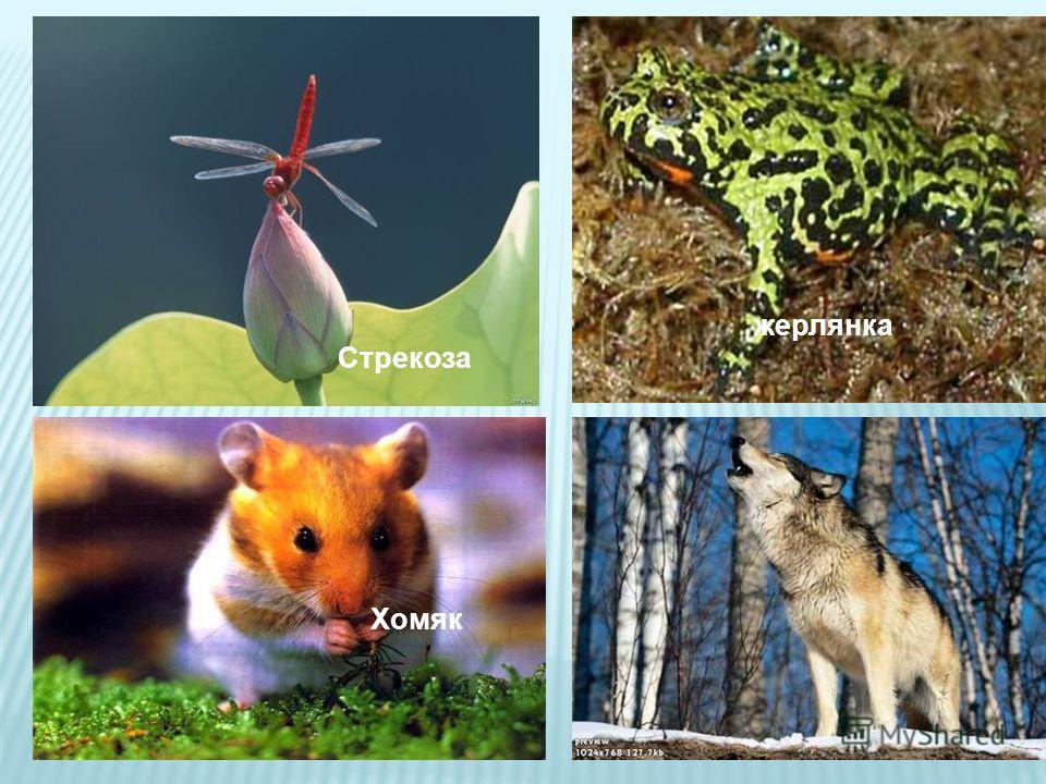 -представители лесов -представители степей -представители лугов -представители болот Животный мир