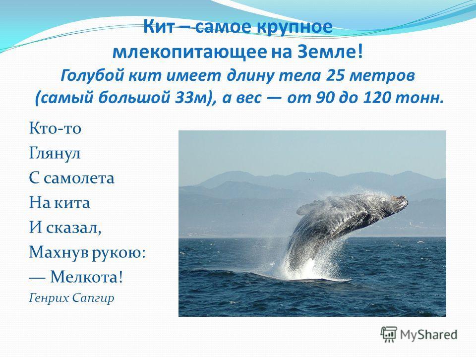 Кит – самое крупное млекопитающее на Земле! Голубой кит имеет длину тела 25 метров (самый большой 33 м), а вес от 90 до 120 тонн. Кто-то Глянул С самолета Hа кита И сказал, Махнув рукою: Мелкота! Генрих Сапгир