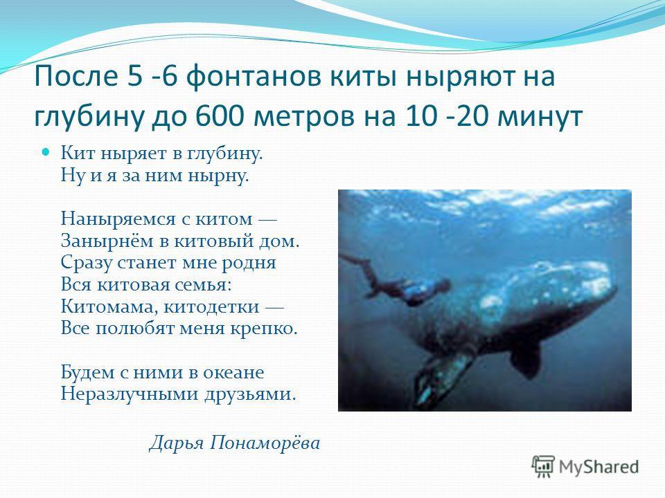 После 5 -6 фонтанов киты ныряют на глубину до 600 метров на 10 -20 минут Кит ныряет в глубину. Ну и я за ним нырну. Наныряемся с китом Занырнём в китовый дом. Сразу станет мне родня Вся китовая семья: Китомама, китодетки Все полюбят меня крепко. Буде