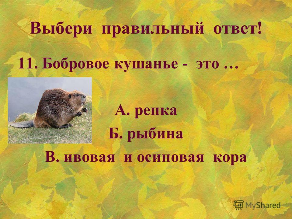 Выбери правильный ответ! 11. Бобровое кушанье - это … А. репка Б. рыбина В. ивовая и осиновая кора