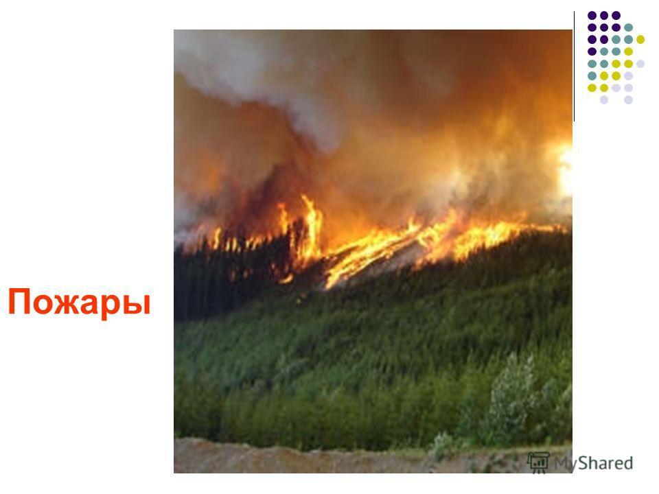 3. Возмещение ущерба Вырубка лесов