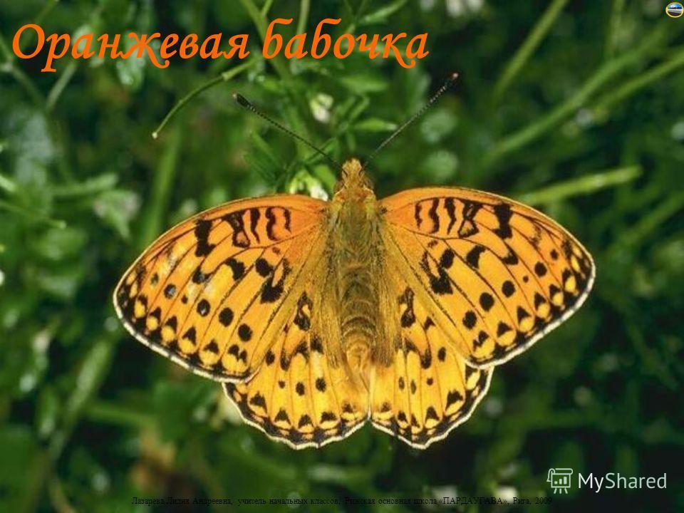 Лазарева Лидия Андреевна, учитель начальных классов, Рижская основная школа «ПАРДАУГАВА», Рига, 2009 Оранжевая бабочка