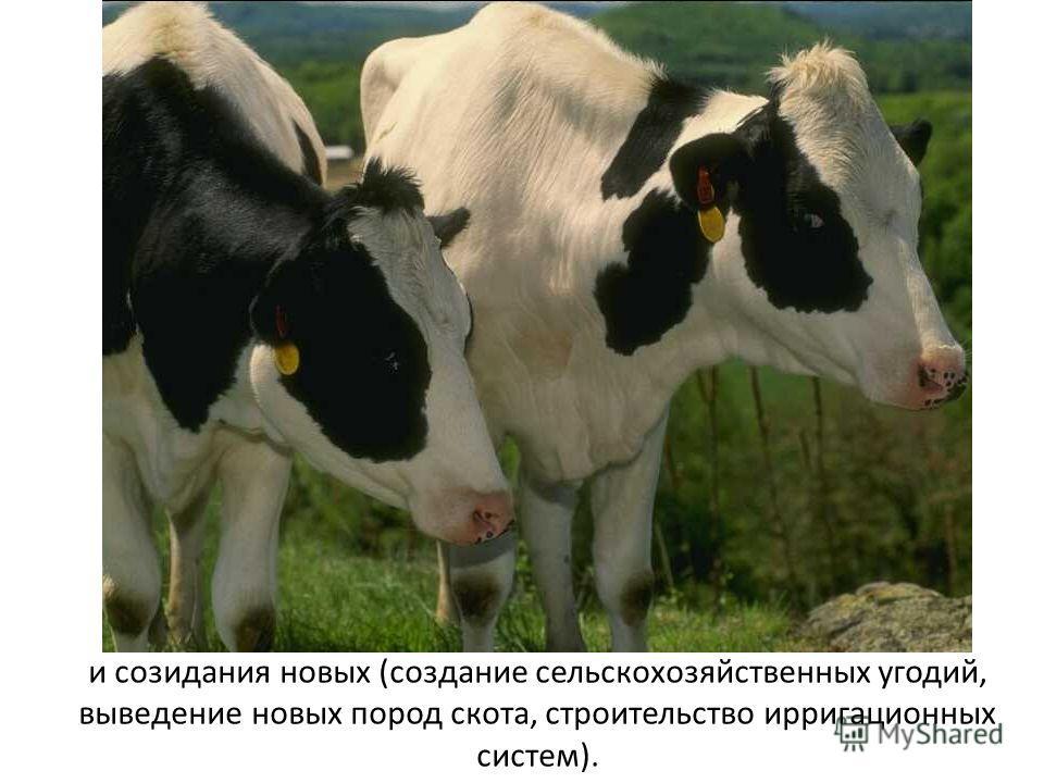 и созидания новых (создание сельскохозяйственных угодий, выведение новых пород скота, строительство ирригационных систем).