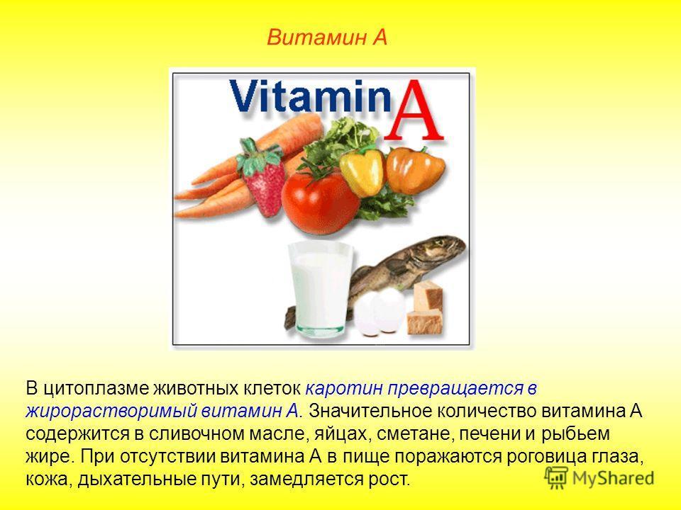В цитоплазме животных клеток каротин превращается в жирорастворимый витамин А. Значительное количество витамина А содержится в сливочном масле, яйцах, сметане, печени и рыбьем жире. При отсутствии витамина А в пище поражаются роговица глаза, кожа, ды