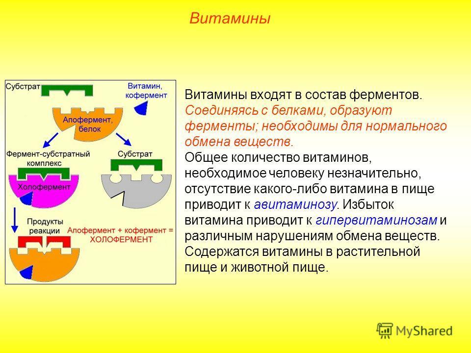 Витамины Витамины входят в состав ферментов. Соединяясь с белками, образуют ферменты; необходимы для нормального обмена веществ. Общее количество витаминов, необходимое человеку незначительно, отсутствие какого-либо витамина в пище приводит к авитами