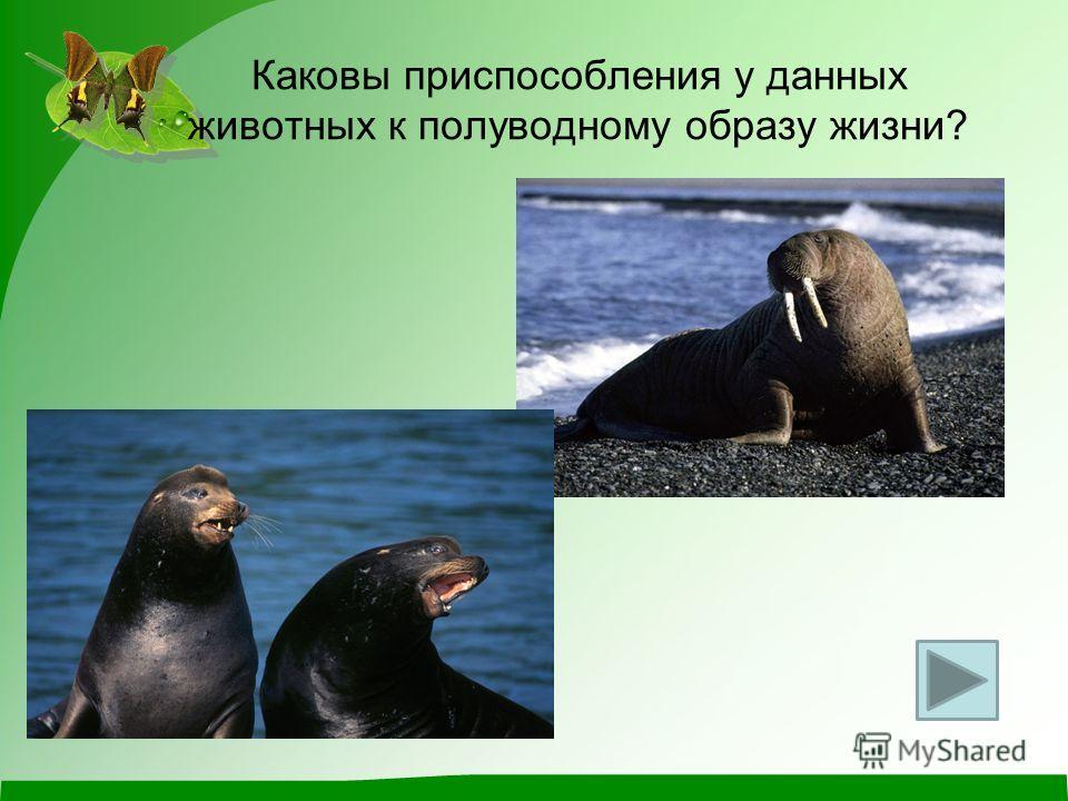 Каковы приспособления у данных животных к полуводному образу жизни?