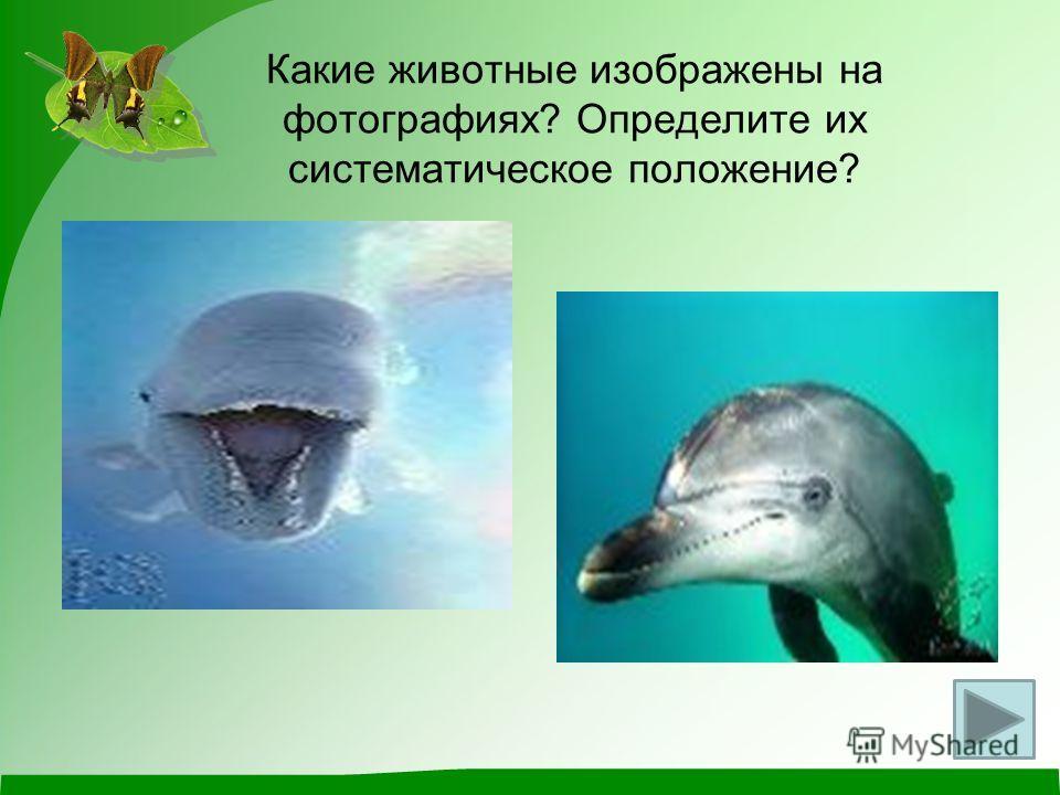 Какие животные изображены на фотографиях? Определите их систематическое положение?